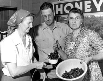 three people with berries