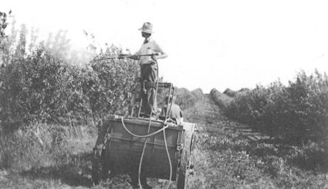 man watering orchard