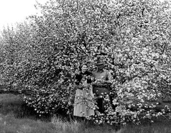 couple standing near blossoming tree