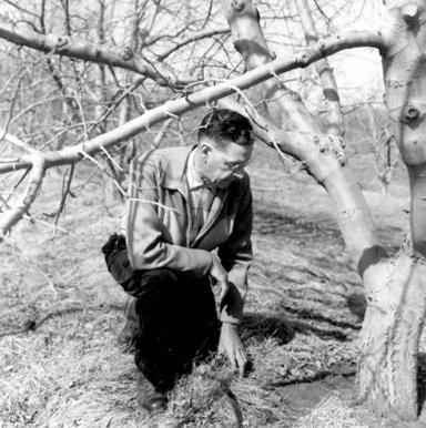 richard kimmel examining tree